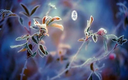 【霜降】秋将逝,冬将至————深秋白癜风养生秘籍请查收